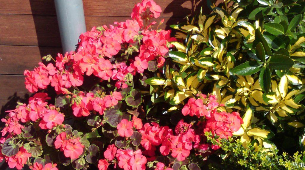 foto flores-primavera-londres