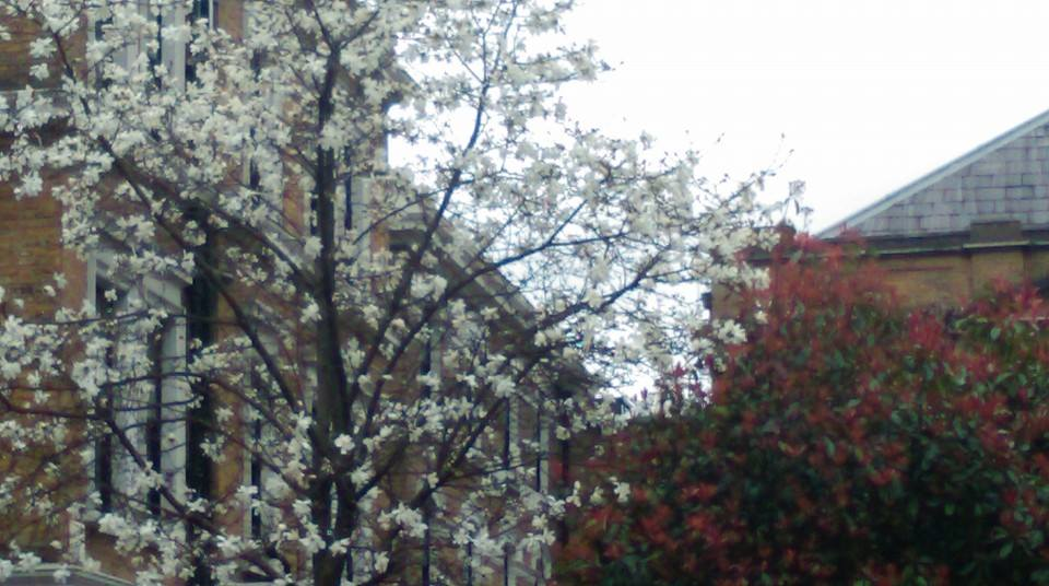 primavera-2015